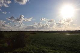 תמונת נוף שדה