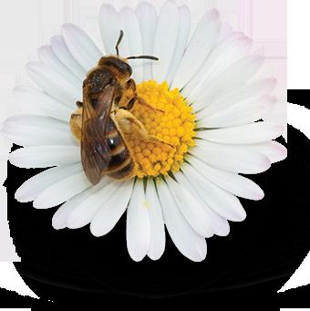 Serviços Ecossistêmicos - Abelhas e polinização