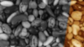 optimeal_beans-orange.jpg