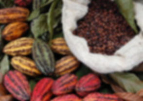 cocoa-image-report-page-2400x1700.jpeg