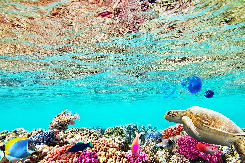 great barrier reef.jpeg