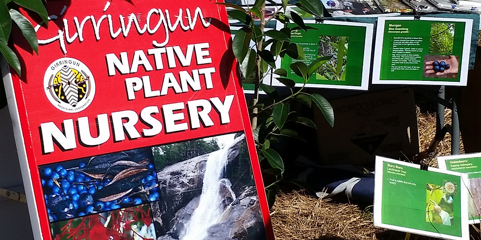 Girringun Native Plant Nursery is open for business