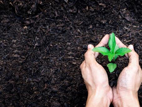 Gardening & Well-being