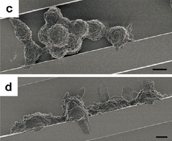 Cell adhesion on topography