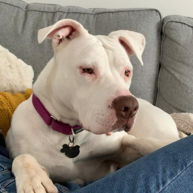 BOO - IN FOSTER
