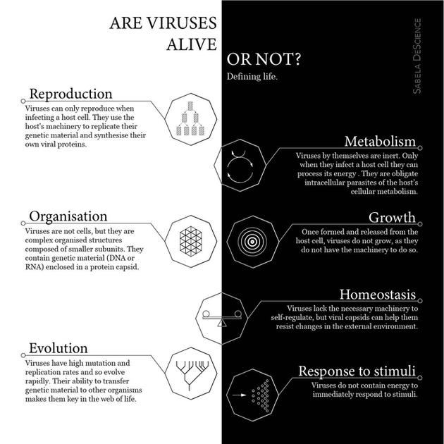 Infographic of the main characteristics of viruses.