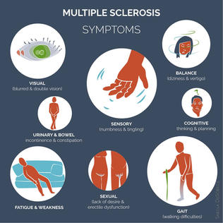 Infographic of the symptoms of MS.