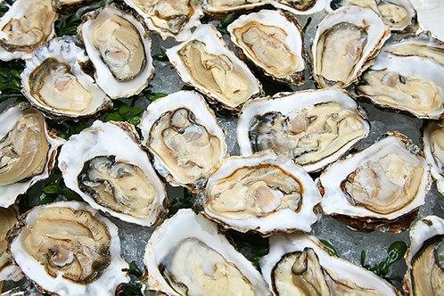 Oysters (1 dozen)