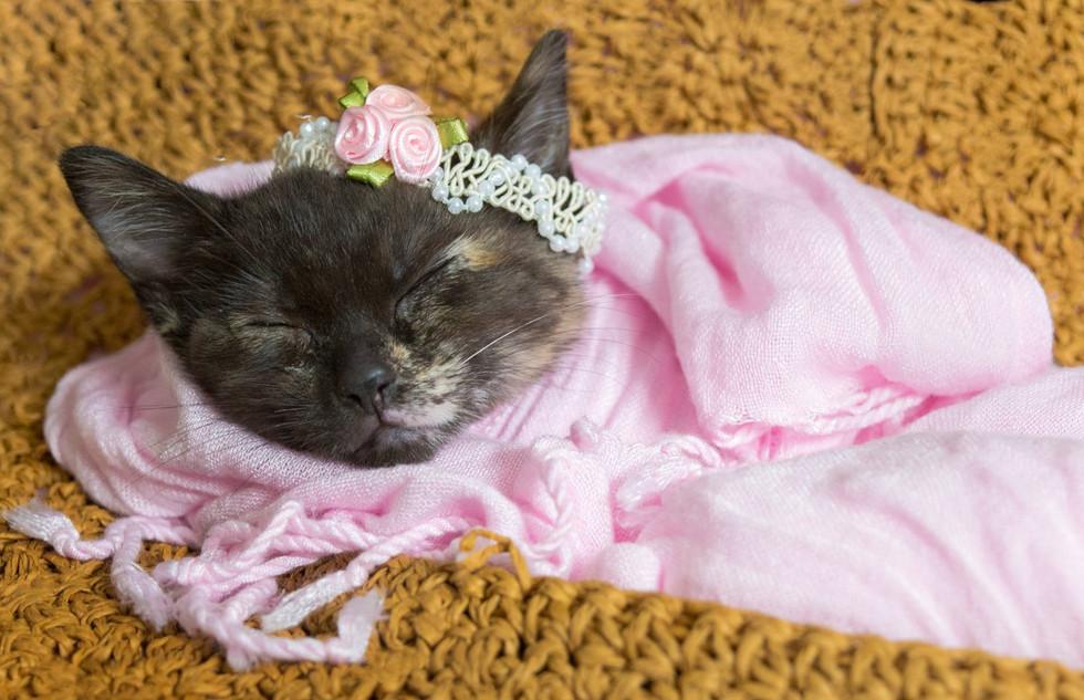 Newborn Pet Portrait