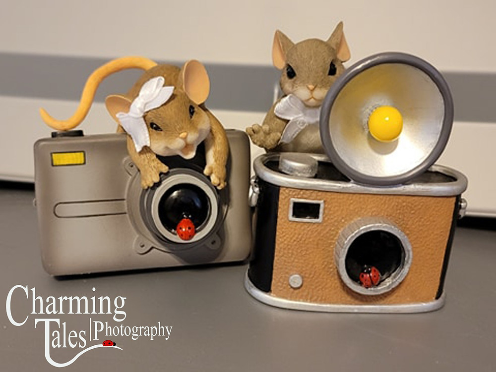 Charming Tales Photographers