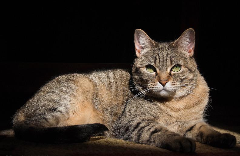 Female cat sunbathing