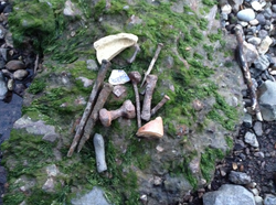 Foreshore Finds
