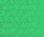 Weed_Strip copy.png