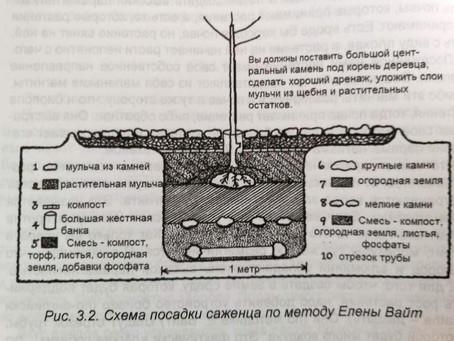 Часть 2. Посадка растений в земляной парамагнитный конденсатор