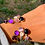 Thumbnail: Jonc Stella & Serena Prune | Bella Tchix