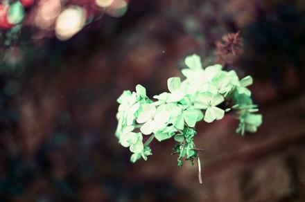 Ana Harff_Nature (19).jpg