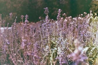 Ana Harff_Nature (1).jpg
