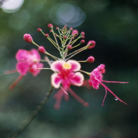 Ana Harff_Nature (9).jpg