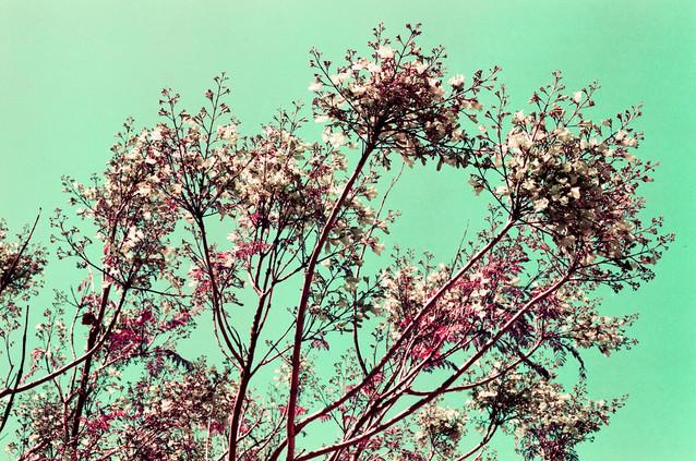 Ana Harff_Nature (17).jpg