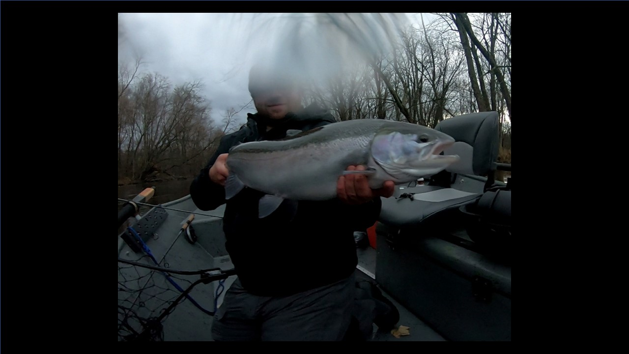 Michigan Steelhead Guide