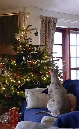 Pippa Juletræ 221220.jpg
