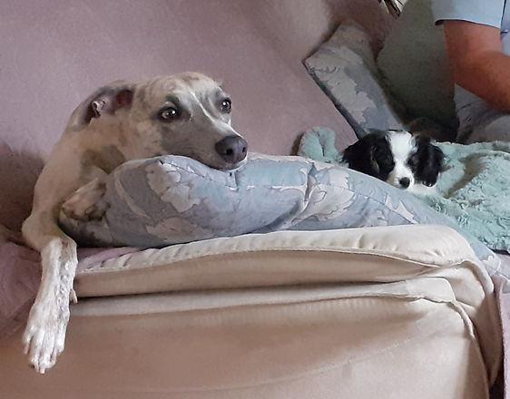 Pippa Topsy TV.jpg