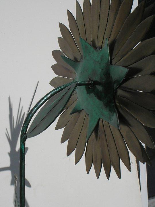 Back of Sunflower Bud