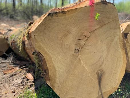 Peut-on se passer de bois ? Seule question que doit se poser l'opinion public