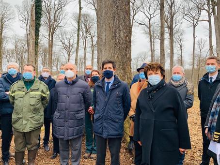 Les premiers chênes destinés à restituer la flèche de Viollet-le-Duc sélectionnés en forêt de Bercé