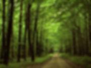 foresta-allegheny-pennsylvania.jpg