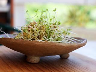 Saiba como fazer grãos germinados :)