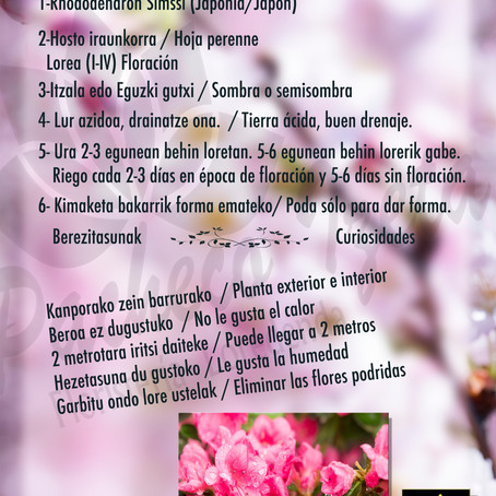 Fitxa 5 - Anthurium