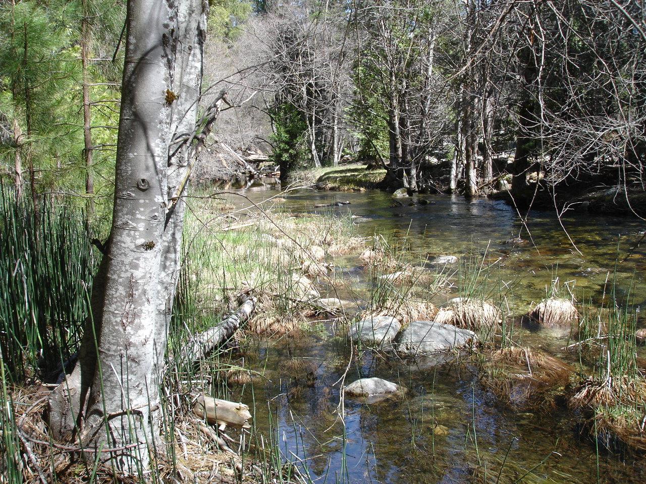 Chilnualna falls creek