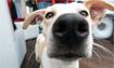 COVID-19: Coronavirus & Pets