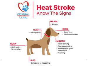 Heat Stroke Signs, Solutions and Prevention