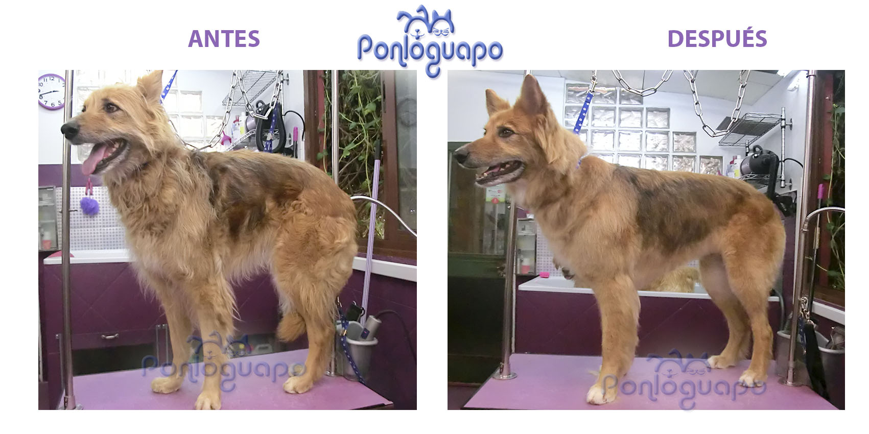 Peluqueria Canina Deslanado