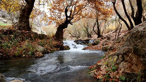 river-inside-forest-near-brown-leaf-tree