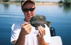 Bluegill Fishing