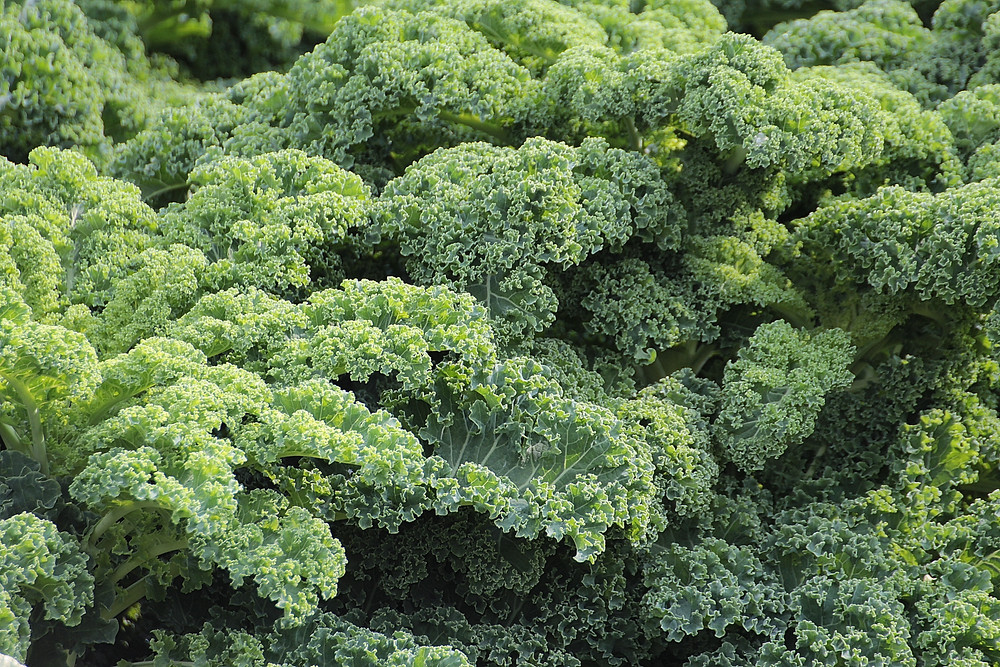 10 foods to eat every day - kale