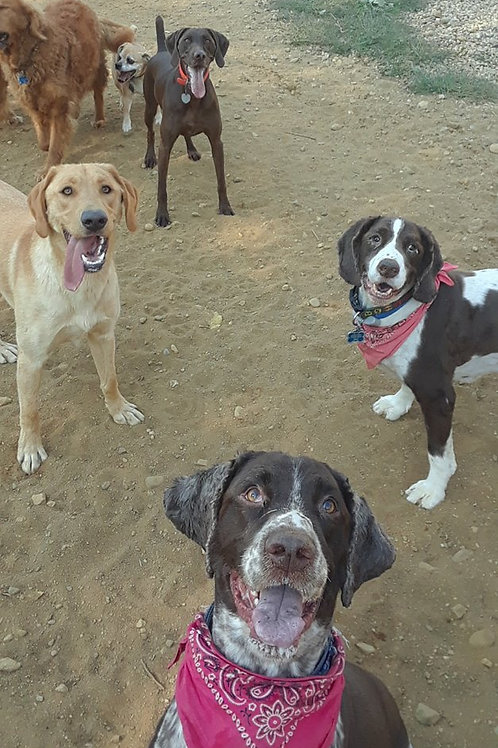1 Month DayCare Package (1x a week- 3 DOGS)