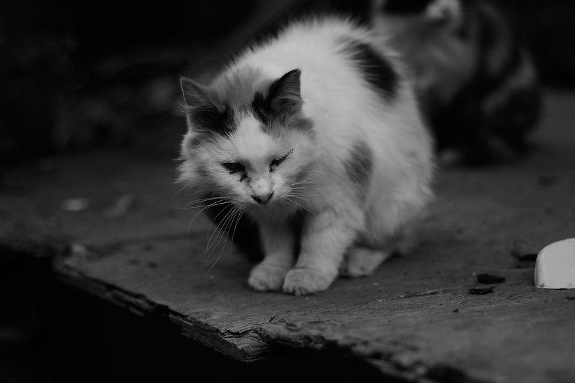 Rural Street Cat One Eye