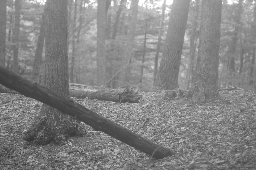 Forest at 50mm