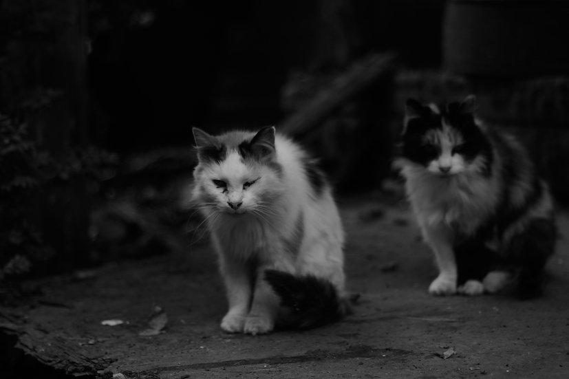 Rural Street Cat Pals