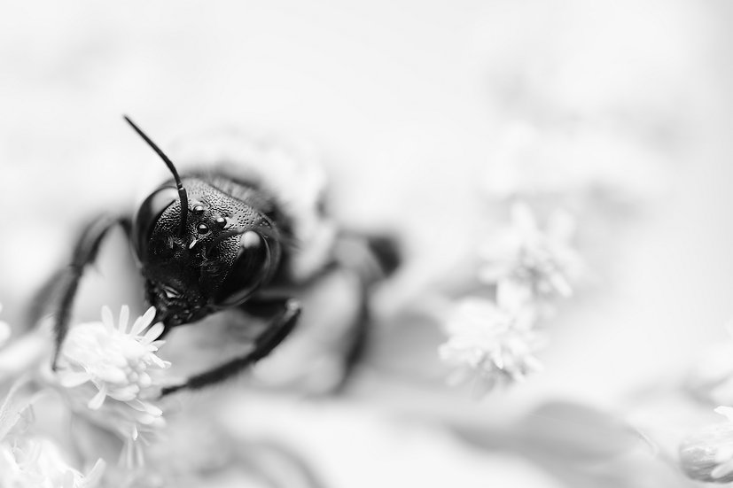 Queen Bee In B&W