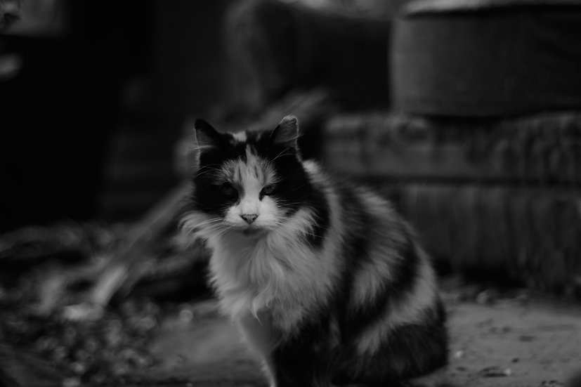 Rural Street Cat , Itchy.