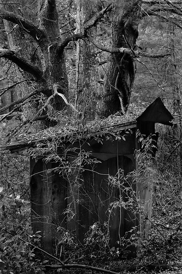 Out House in Forest