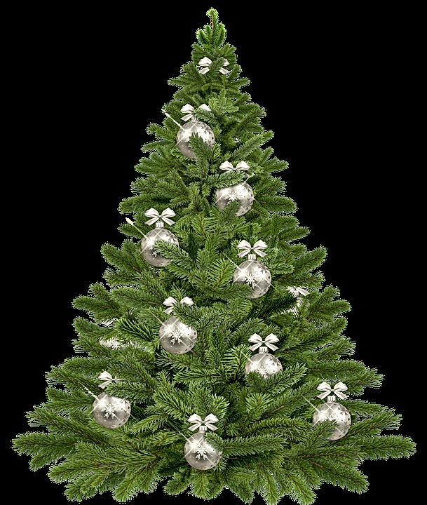 christmas-tree-1853582_960_720.webp