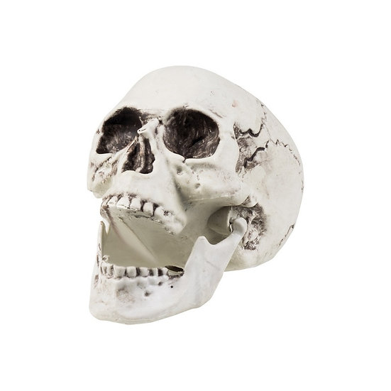 Skull Crâne / ROKA CONCEPTS - BOUTIQUE CADEAUX INSOLITE - YVERDON-LES-BAINS