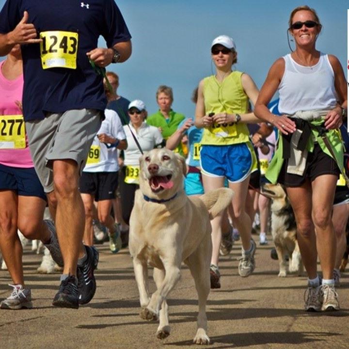 Quinn's Dog Run