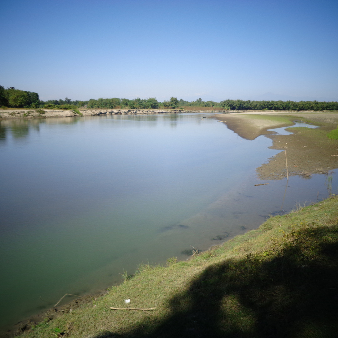 Zebrafish habitat: a fast-flowing river